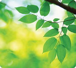 Muismat Fellowes natuur collectie bladeren